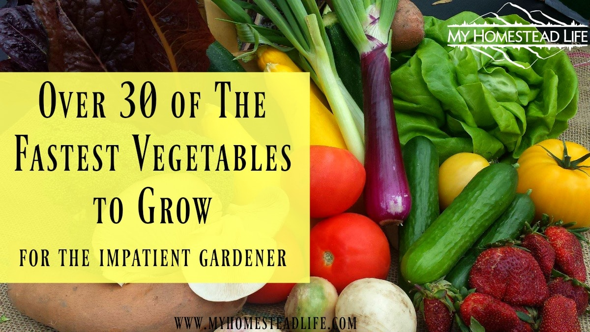 Over 30 of the Fastest Vegetables to Grow for the Impatient Gardener