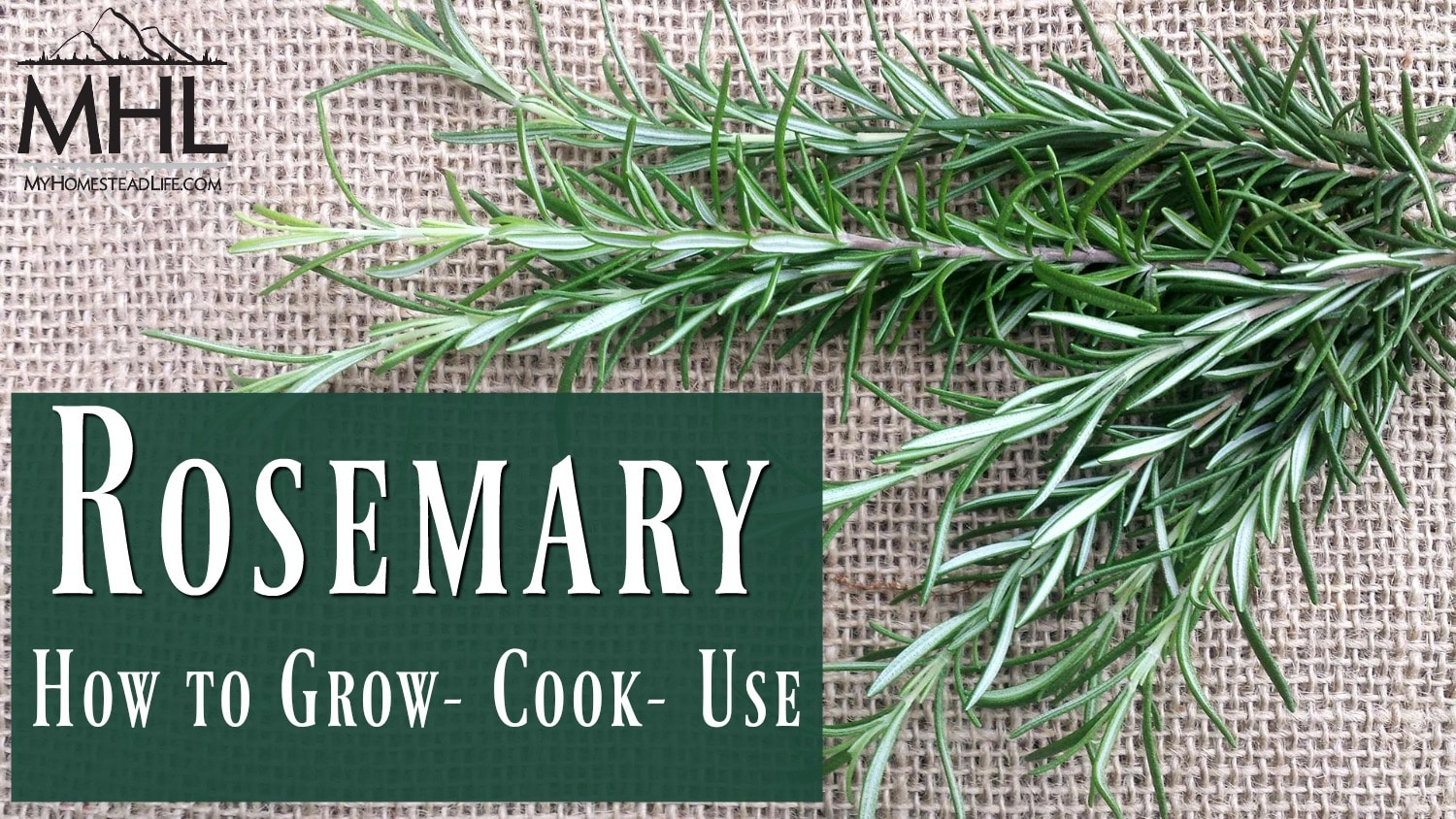 Rosemary how to grow, cook and use rosemary