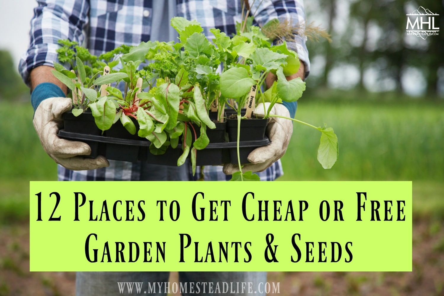 12 Places to Get Cheap or Free Garden Plants & Seeds