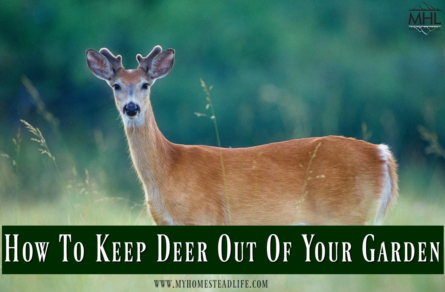 deer-garden-keep deer out-garden pest- gardening